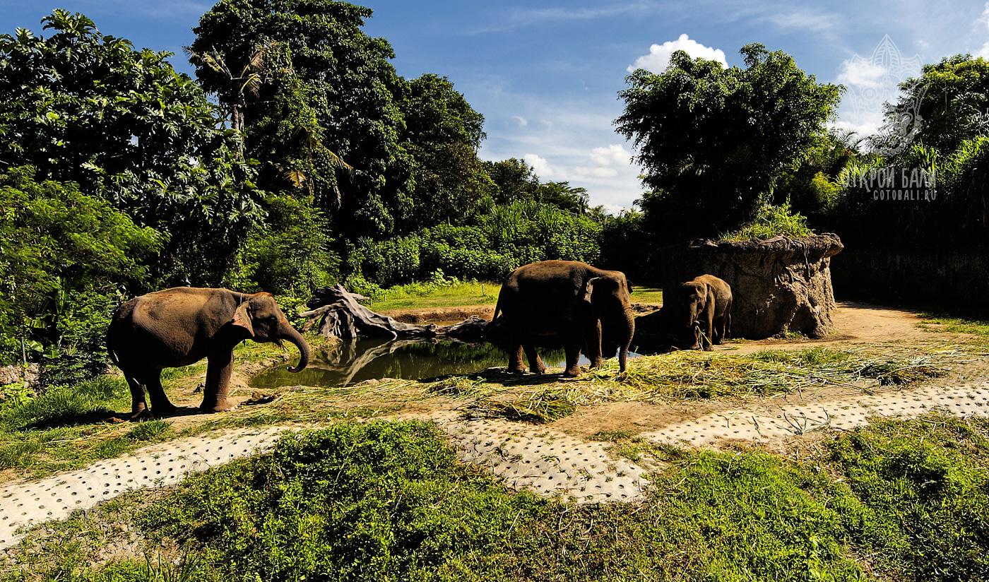 Сафари и морской парк Бали
