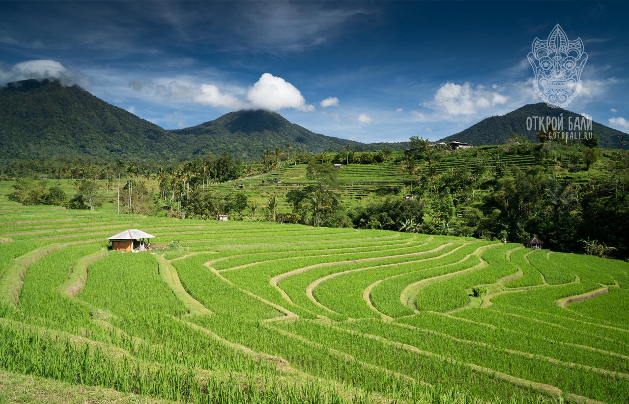 Табанан (Tabanan Regency)